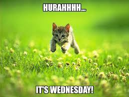 hooray wednesday!