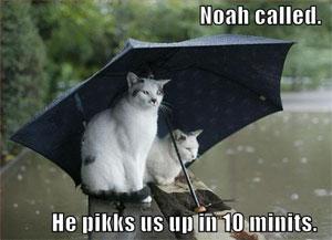 Umbrella cats
