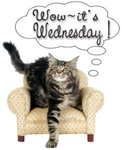 wednesday_cat_chair