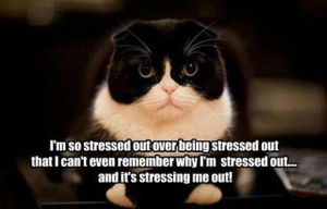 stressed-out-cat