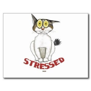 stressed out kitty