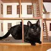 Yeah, Midnight's totally hanging out in my old doll house. Catzilla!