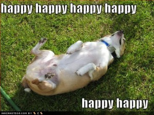 loldog-happy-dog-pictures-happy-hap