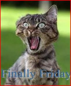 finally-friday-cat4