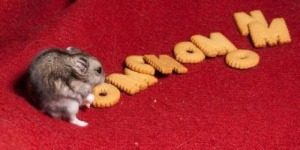 mouse-cracker-om-nom-nom
