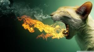 flaming_cat-wallpaper-1920x1080
